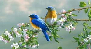 Картинки по запросу птицы