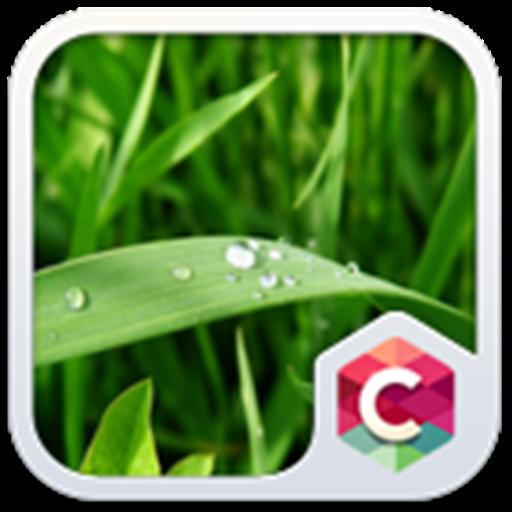 Best Green Leaves C Launcher