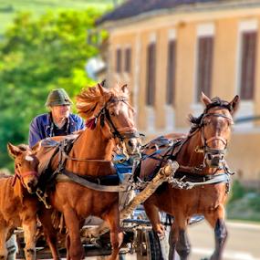 by Mihai  Costea - City,  Street & Park  Street Scenes ( horses, cart )