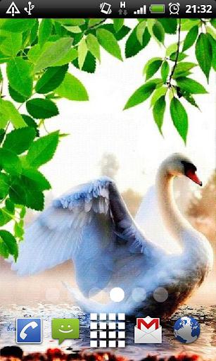 Swan in Water Live Wallpaper