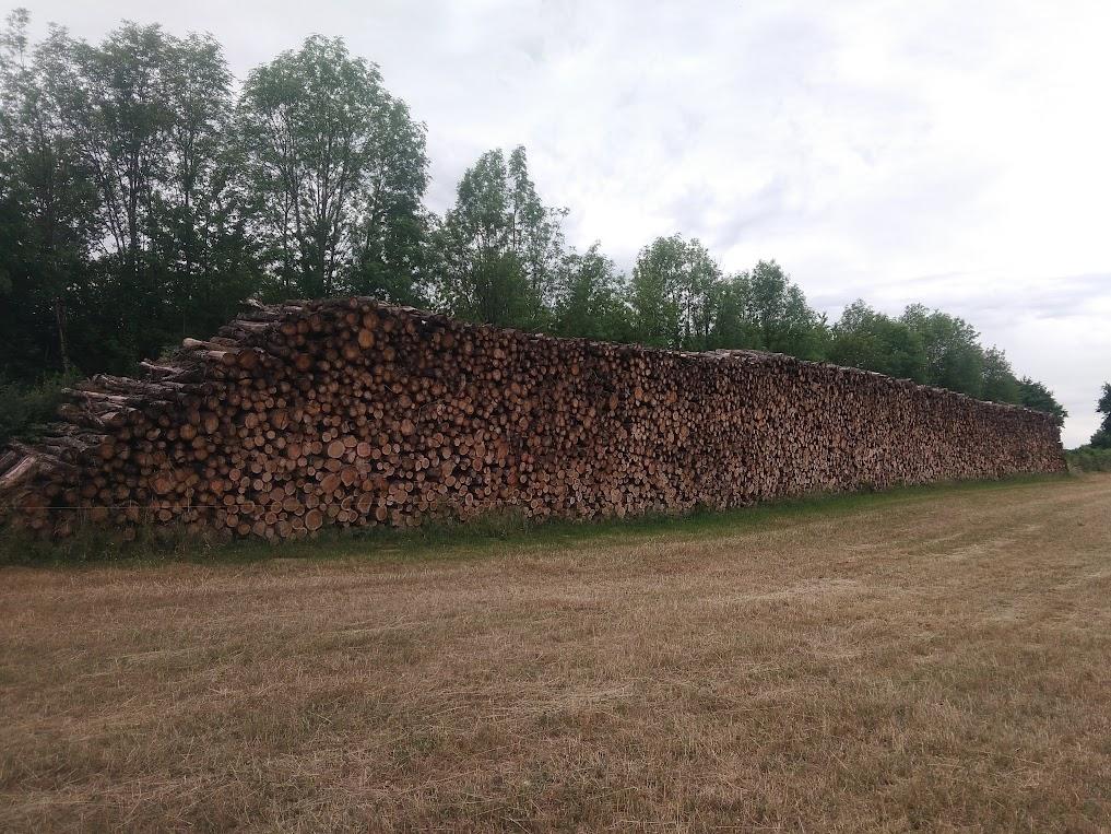 pile de bois de chauffage en 2m en forêt