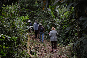 Photo: Soon we land and walk 20 minutes to our lodge through secondary forest that was once a large coca plantation. Fiorella points out fresh jaguar and ocelot tracks along the path. We also experience the very strong and unpleasant smell of peccaries, which must have just passed by.