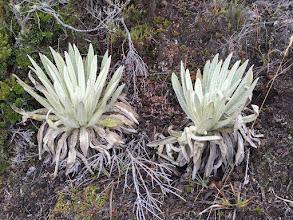 Photo: Freijelon plants