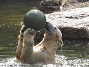 Photo: Nancy testet den neuen Ball :-)