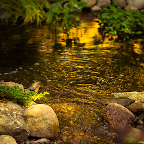 Koi Pond by Winterlyn Stebner - Nature Up Close Rock & Stone ( water, sunset, waterfall, plants, rocks, pond )