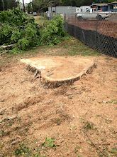 Photo: Only the stump remains