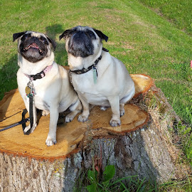 winston and Willow by Ingrid Bjork - Animals - Dogs Portraits ( dogs )