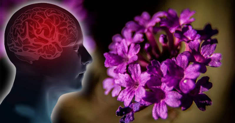 This Plant Can Fight Anxiety, Calm Racing Thoughts, and Improve Sleep – Here's How