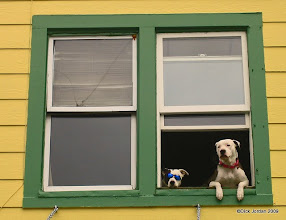 Photo: Eyeballing The Tourists, Stedman Street, Ketchikan, Alaska