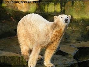 Photo: Knut schaut sich seine Besucher nun ganz genau an ;-)