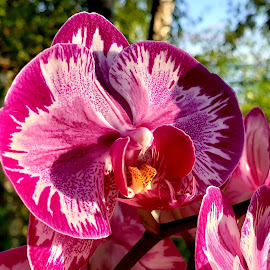 Orchids by Gene Richardson - Uncategorized All Uncategorized