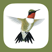 App Icon for Sibley Guide to Hummingbirds App in Czech Republic Google Play Store