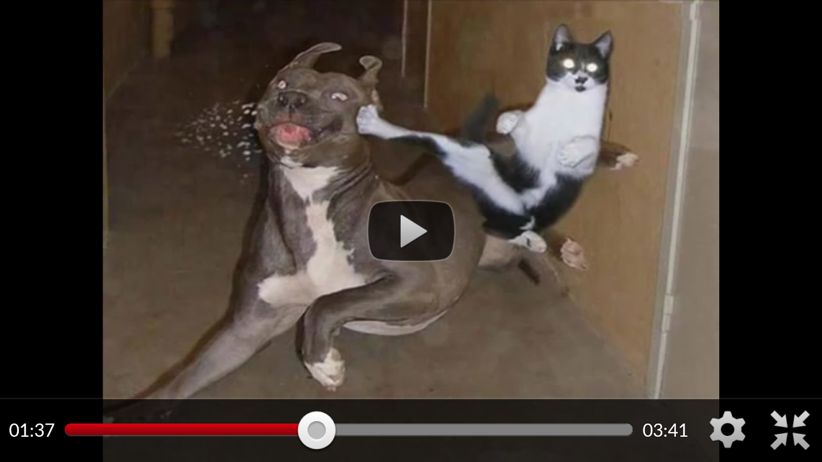 Uncategorized Funny Dog And Cat Videos funny animal videos cats dogs android apps on google play screenshot