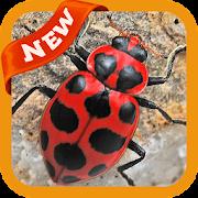 Beetle Wallpaper