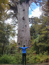 Photo: Hugging the king of the forest, a 2000 y.o. Kauri tree.