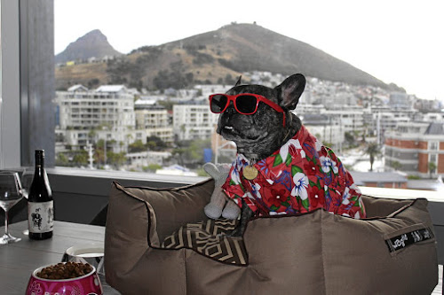 Car or plane: what's the best way to take my pet along on holiday?