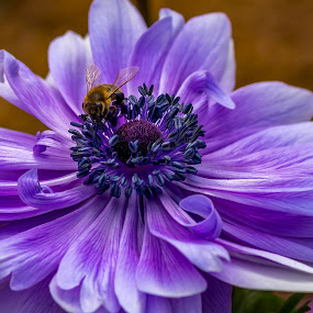 Bee's hard work by Jose Rojas - Flowers Single Flower ( nature, flora, bee, nature up close, blueflower, flower )