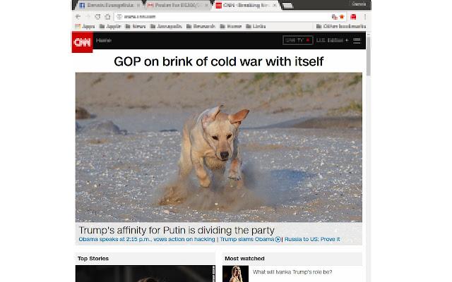 Make America Puppies Again