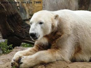 Photo: Knut schaut sich seine Besucher an ;-)