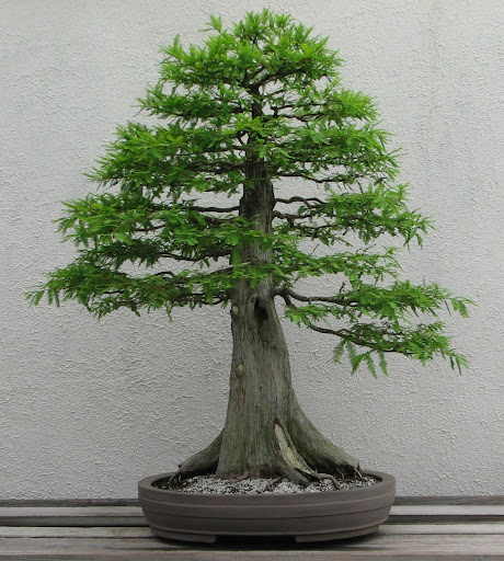 The Art OF Bonsai project