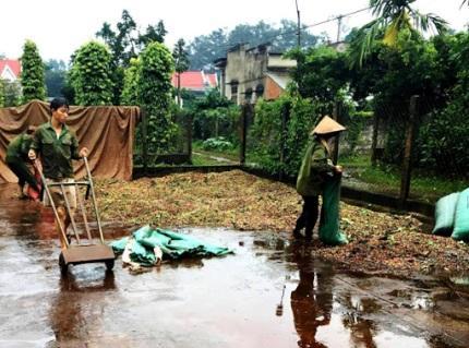 Thu hoạch cà phê gặp khó vì mưa trái mùa - Báo Đắk Lắk điện tử