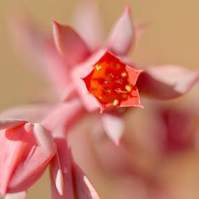 by Jane Fourie - Flowers Flower Buds (  )