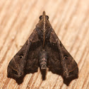 Faint-spotted Palthis - 8398