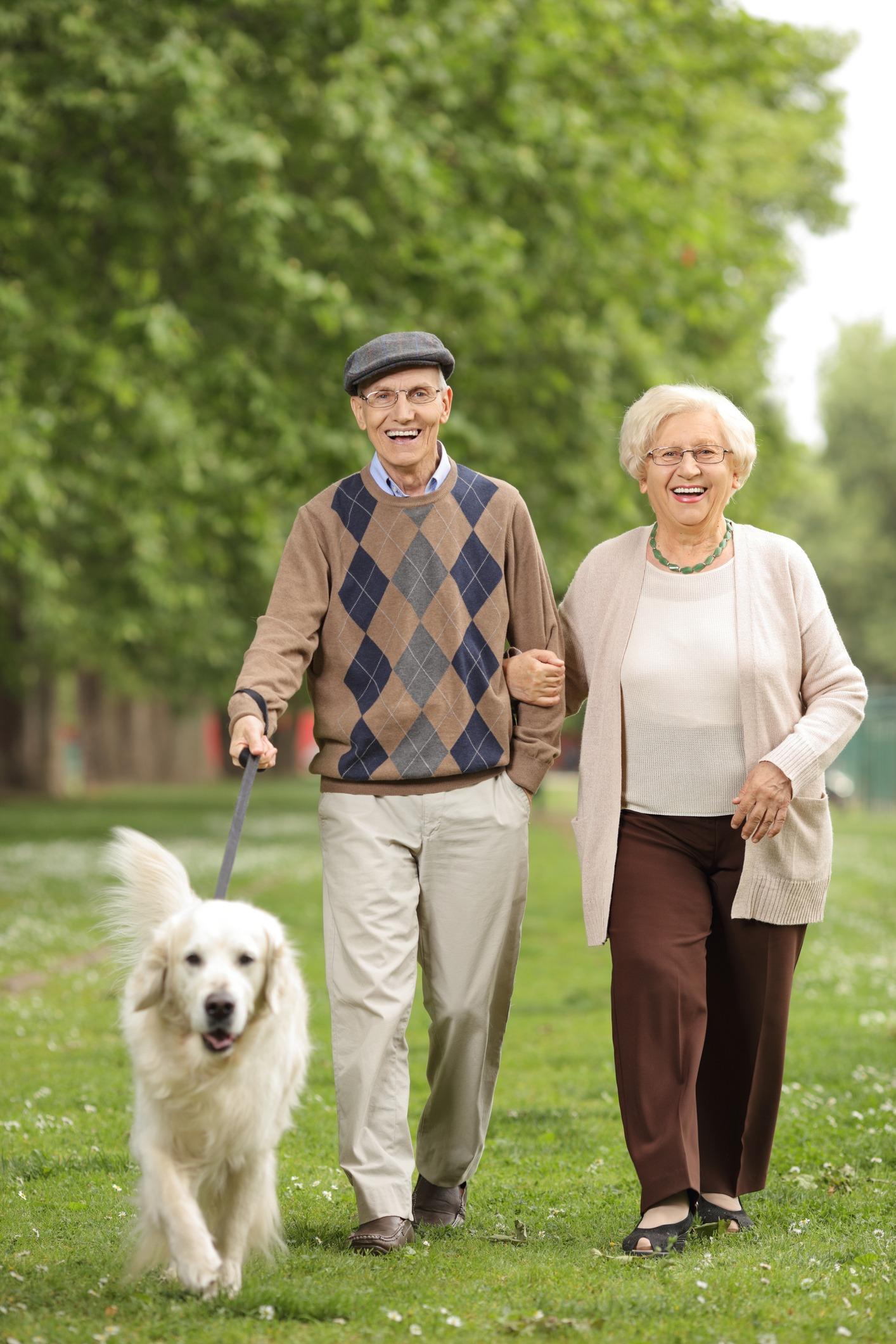 senior citizens dog adoption