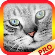 Translator for Cats - Cat Translator PRO (no ads)