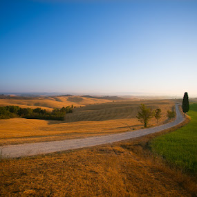 Sole Cypress by Luca Libralato - Landscapes Prairies, Meadows & Fields ( tuscany, cypress, siena )