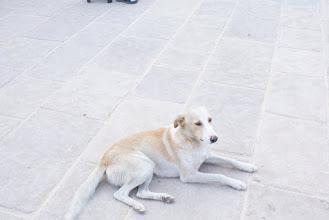 Photo: Dog outside Fes