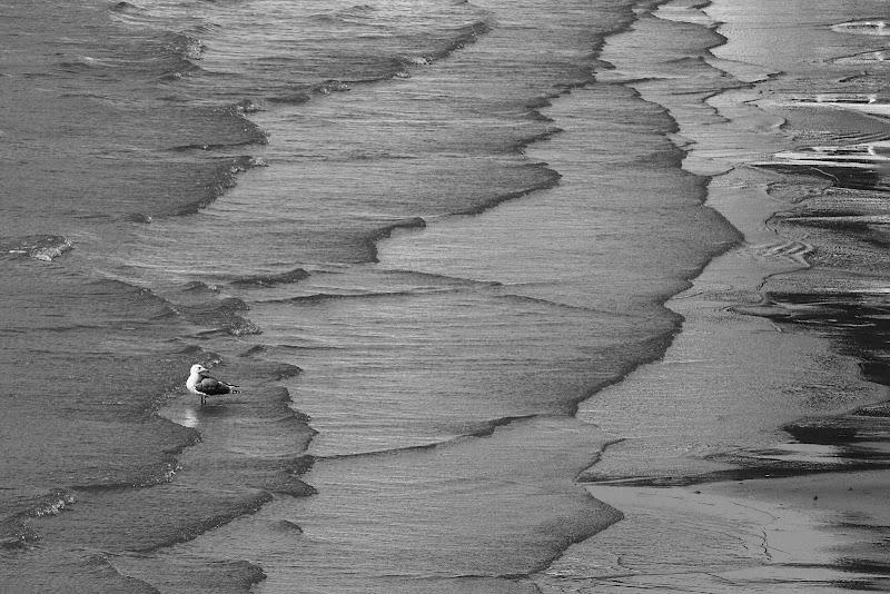 Waves di Dawild