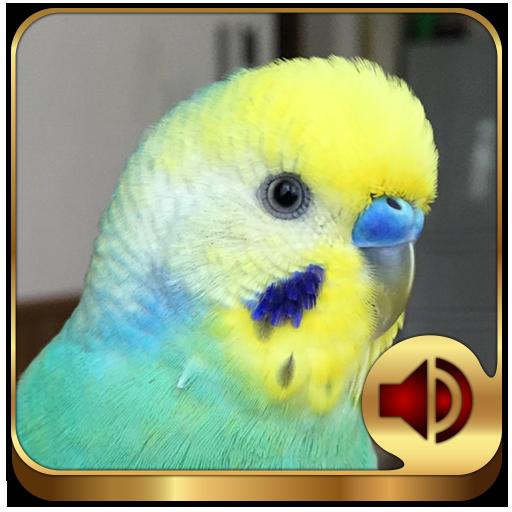 Budgerigar Ringtones - Apps on Google Play