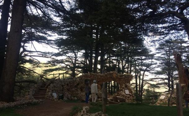 Cedros do Líbano