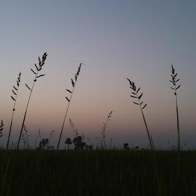 after a long night.. by Debapriya Bhattacharya - Landscapes Sunsets & Sunrises