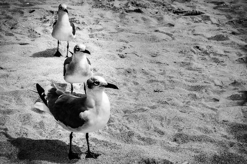In fila per 3 di marikarossiphotography