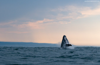 Photo: humpback whale and after storm sky