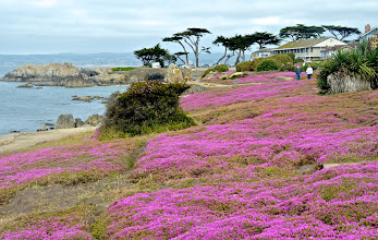 Photo: 58. This is a sample from the PG coastline. Much of it was pretty much a sea of pink. I think the plants that are producing all that eye-popping color are a type of small iceplant.