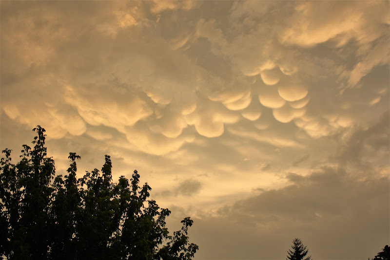 nuvole tonde soffici di Cimabue
