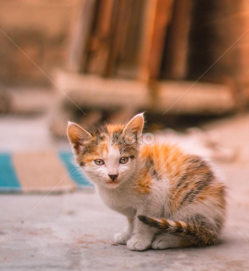 Beauty And Cuteness Kittens Animals Cats Pixoto