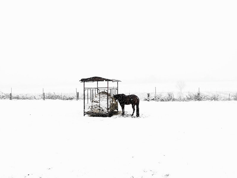 pasto freddo di elisabetta_de_carli