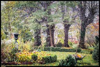 Photo: Herbstfarben in meinem Garten