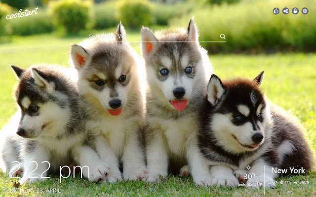 Husky HD Wallpapers Dogs And Puppies Theme