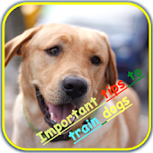 improve your dog training
