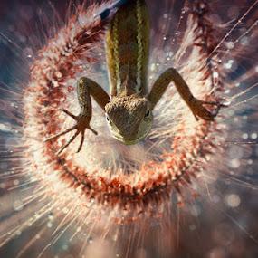 Hmmmmm ..  by Angga Putra - Animals Reptiles ( lizard )