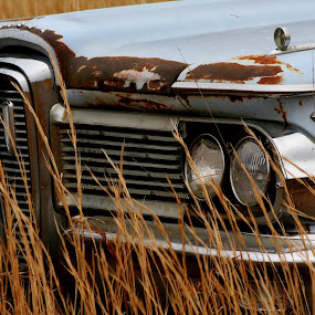 Edsel by Leslie Hendrickson - Transportation Automobiles ( edsel, car, rust, rural, abandoned,  )