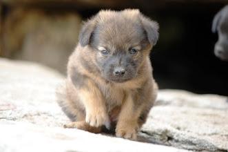 Photo: 後門很可愛的小狗