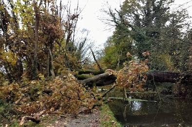 Fallen tree blocks canal path