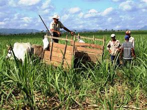 Photo: La cachaza.. Sustainable Sugarcane Initiative (Sistema de Caña de Azúcar Sostenible - SiCAS) 2012 [Photo by Rena Perez]
