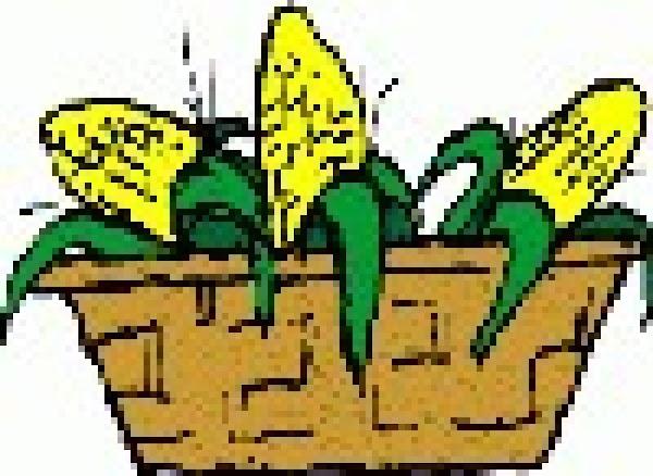 Different Corn Recipe